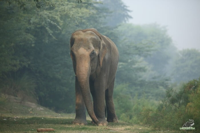 The exercised walks on natural soft floor are important for Karma's joint health.