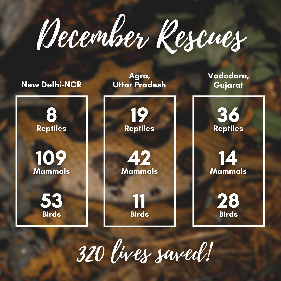 The WSOS Rapid Response Unit rescued 320 animals in December, marking the end of 2020.