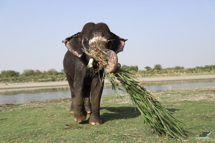Where Rajesh goes, the fodder follows - or the other way around!