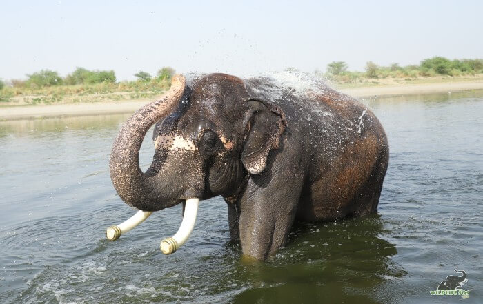 Rajesh and his endless love for water!