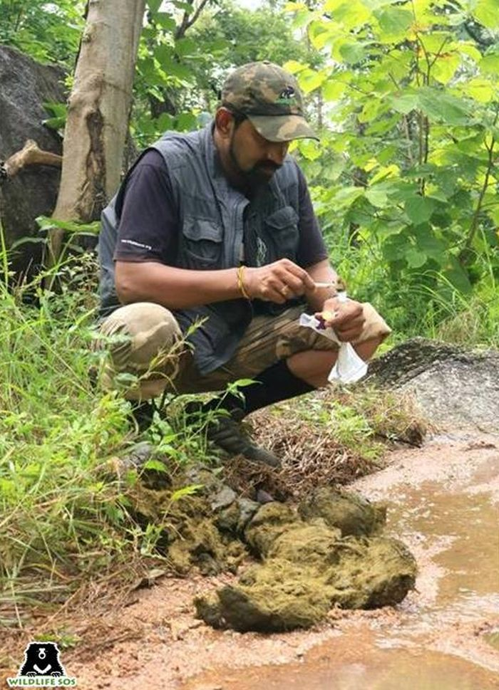 Dr Arun Sha leading a team for a wild elephant herd radio-collaring project.