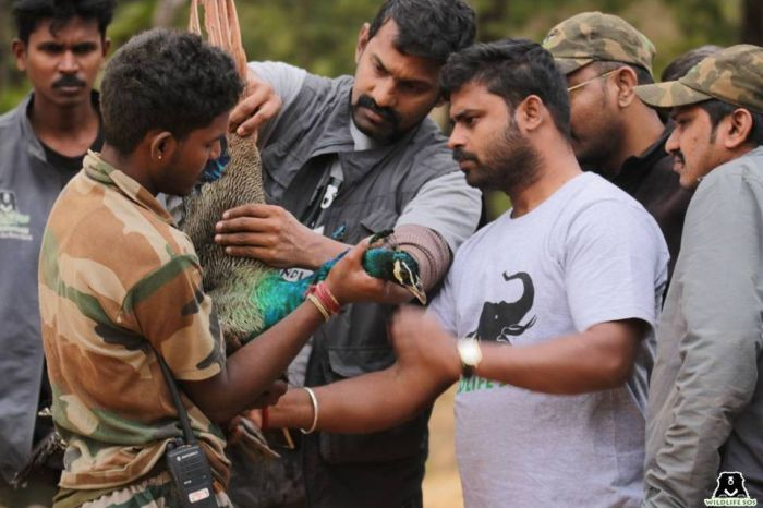 Dr Sha & his team rescuing a peacock sporting injuries on its wing alongside the Forest Department.