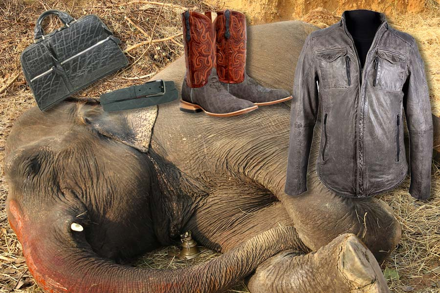 Demand a stop to the trade in elephant skins!