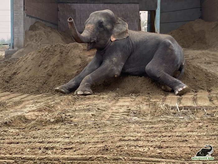 """Zara caught """"mud-handed"""" as she disarranges her mud bed!"""