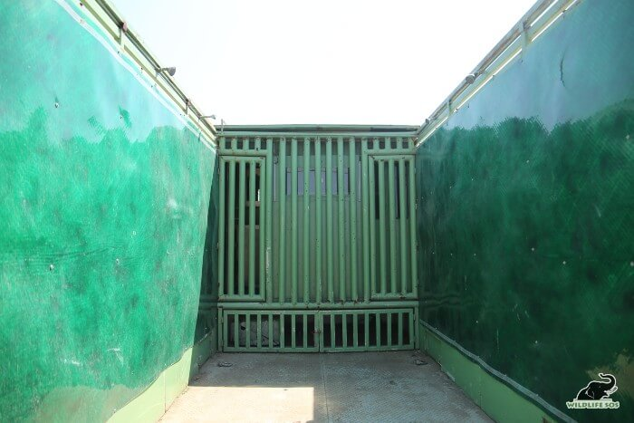 The green covering prevents the elephant from hurting themselves from the metallic interiors