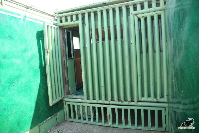 The protected contact wall allows safe interaction between elephant and the veterinary team.