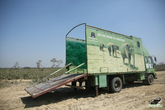 The Elephant Ambulance is designed to provide utmost care and comfort to the rescued elephant and the staff.