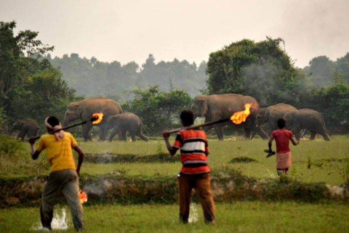 Lighting a fire at a safe distance allows the elephants to understand the presence of humans.