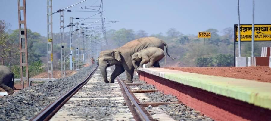 Railway tracks often cut through elephant corridors, causing fatality.