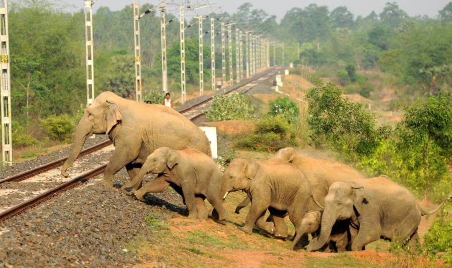 An elephant herd crossing through a railway track.