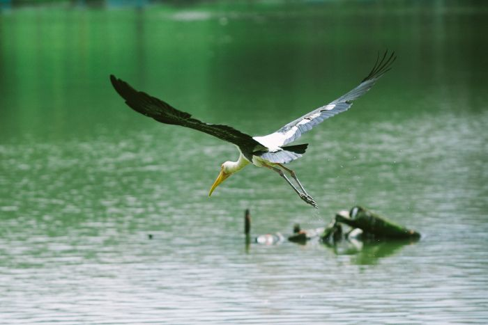 A wetland is the name of a land either permanently or temporarily inundated by water.