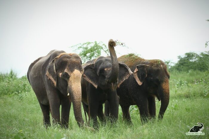 Karma, Holly and Kalpana are always seen together, with Holly nestled between the two