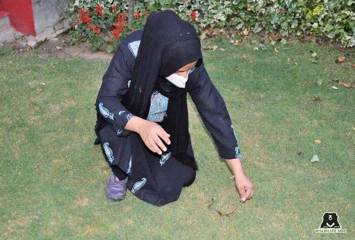 Aaliya Mir rescuing a baby snake from a farmhouse in Srinagar, Kashmir.