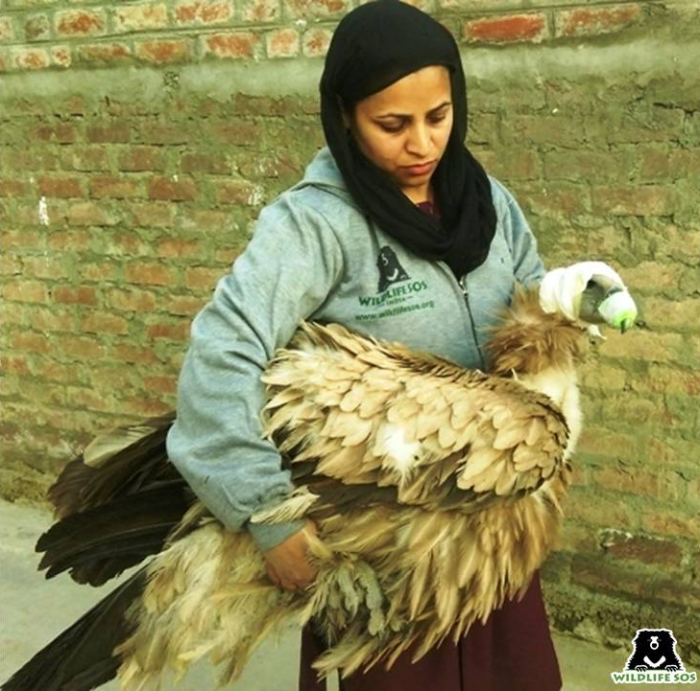 """""""We have to be kind towards all the animals that share our landscape"""" - Aaliya Mir."""