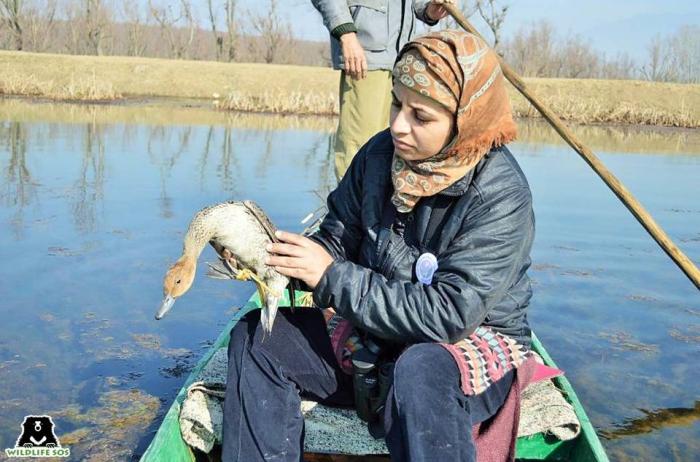 Aaliya Mir leads the WSOS conservation program in Jammu & Kashmir.