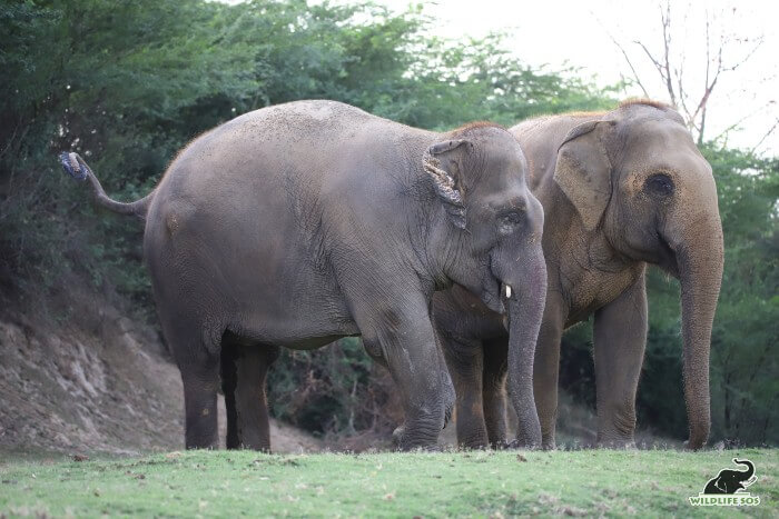 Emma and Phoolkali standing next to each other by the Yamuna riverside.