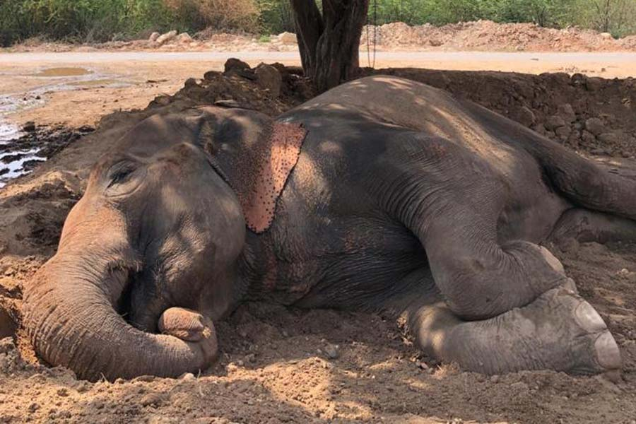 Justice for Lakshmi - Ban Elephants from India's Roadways!