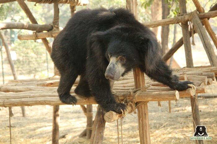 Bean ensured that he made full use of all his structural enrichments in the field.