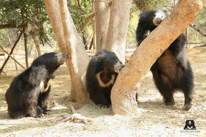 Bean, Rose and Bintha (L to R) on a bright sunny morning in their free-ranging field.
