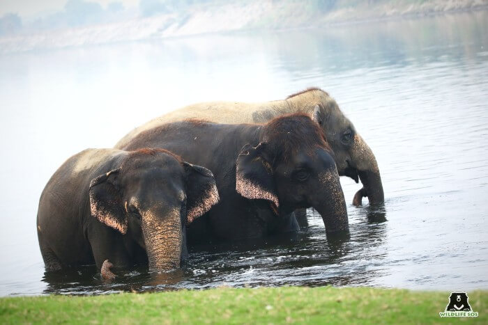 Our resident elephants, Bijli, Chanchal and Laxmi, send you positivity in these difficult times.