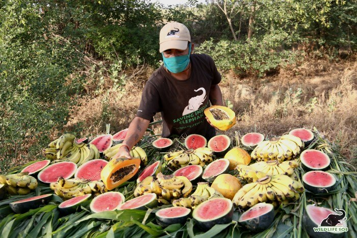 Her caregiver cutting up all her favourite fruits for the feast!