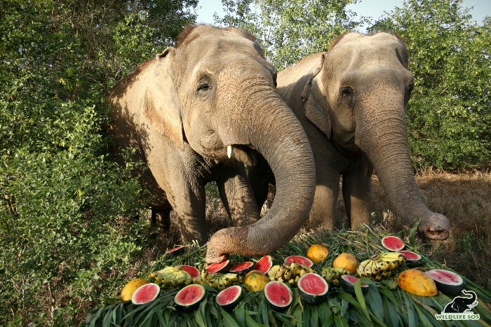 Rhea (L) and Mia (R) enjoying the fruit feast together!