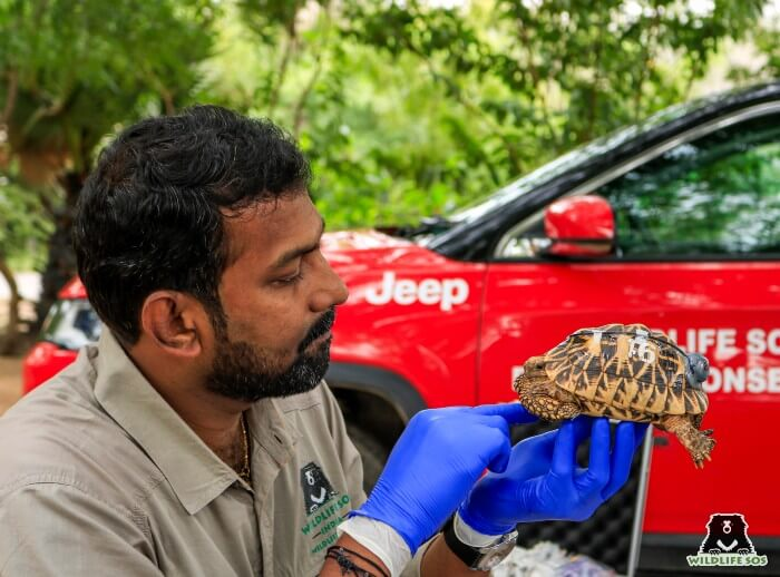 Dr. Arun installing geotag on Star Tortoises