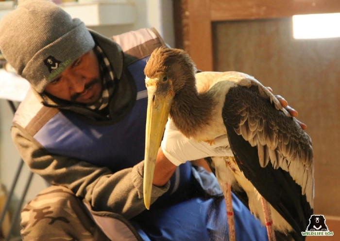 Dr. Ilayaraja treating a stork at the Agra Bear Rescue Facility.