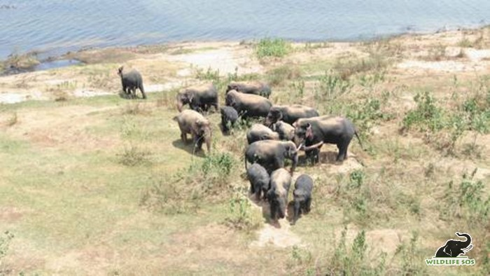 The herd presently has two calves which are estimated to be around 2 years old