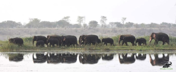 The herd by the Mahanadi riverside on a hot summer day.