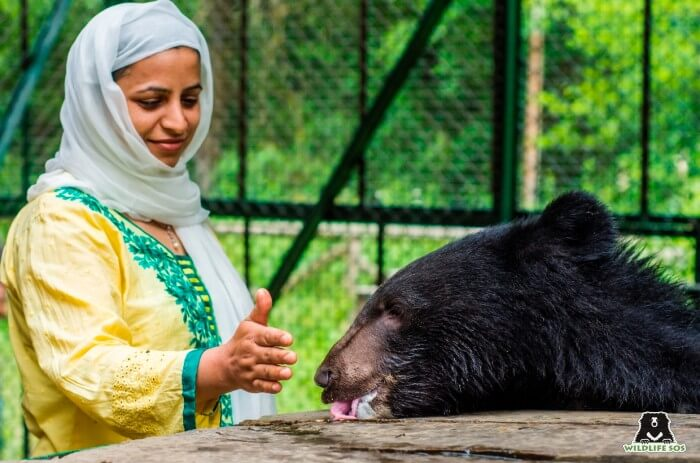 Ms. Aaliya Mir with our rescued black bear in Kashmir.