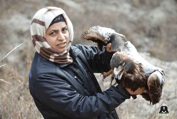 The Black Kite was struggling to fly when it was rescued.