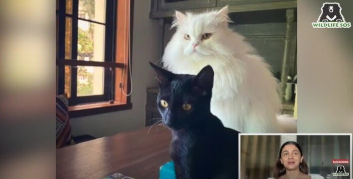 Alia's newly adopted kitten, Juniper with her cat, Edward.