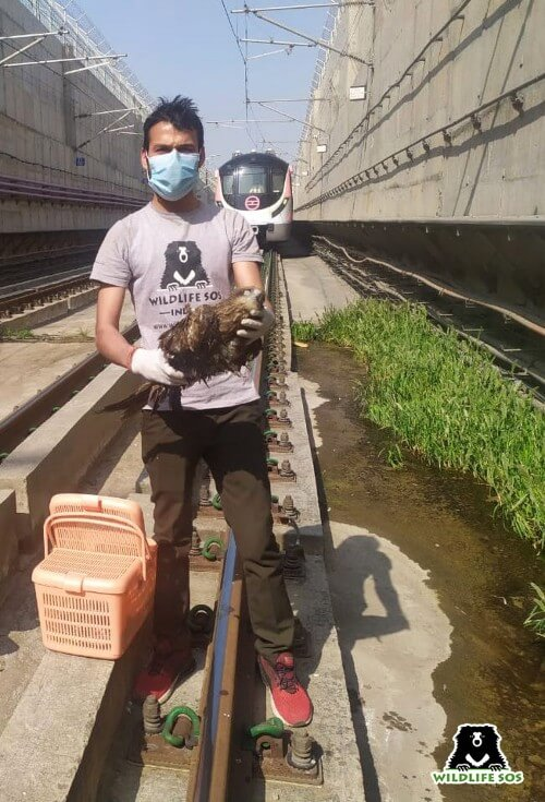 A black Kite was rescued from Delhi Metro train tracks.