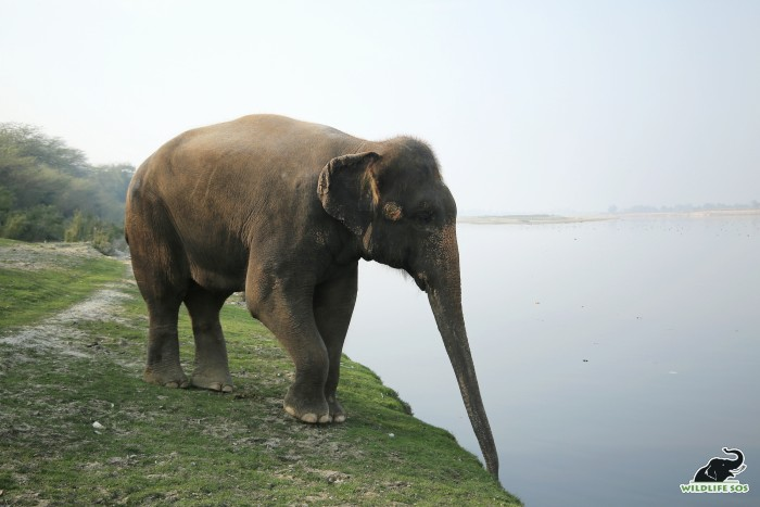 An elephant's feet balances their large structure and allows them to move easily.