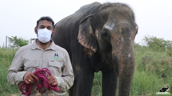 Dr. Arun with Nina's bells, while she munches on some fresh green grass!