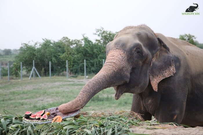 Raju gorged on his surprise feast and was absolutely delighted.