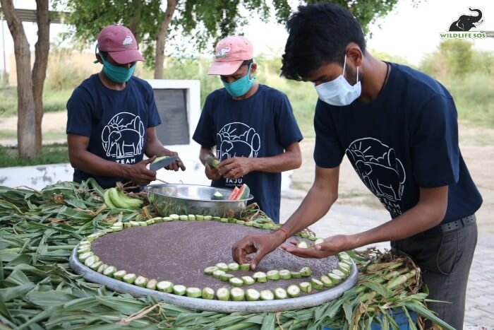 The elephant care staff and field team preparing Raju's delicious cake.