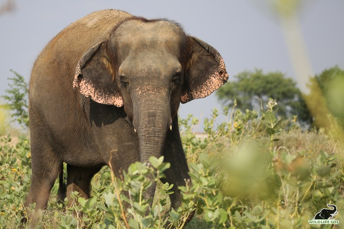 Emma slowly walks around the surroundings of the Centre every morning and evening.
