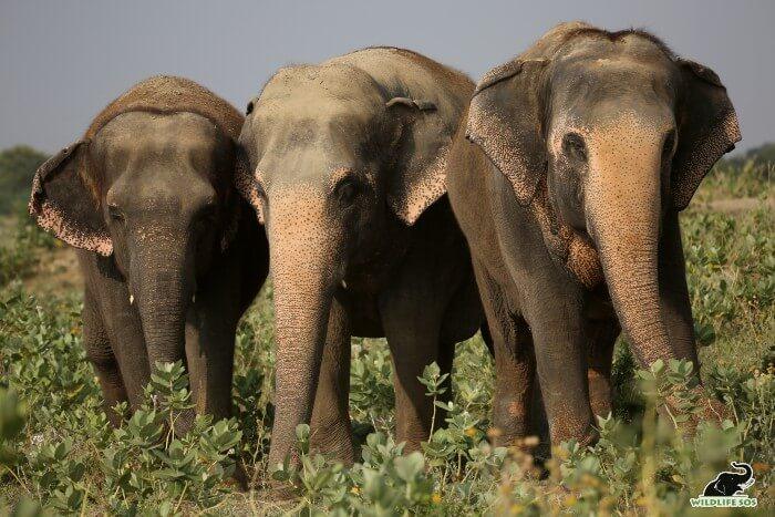 Emma, Maya and Phoolkali captured on one of their walks.