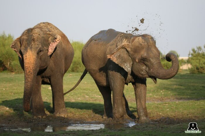 Kalpana (L) and Holly (R) splashing cool, wet mud all across them on a late evening walk