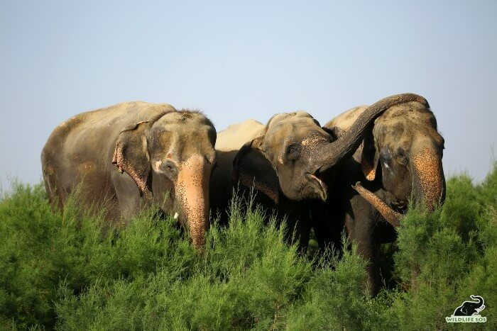Karma and Holly are blind, while Kalpana has partial vision which is why the herd is grouped together.