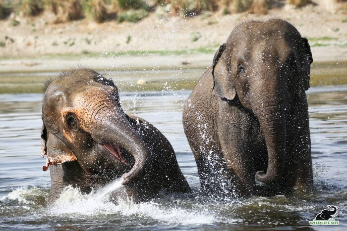 Coco and Peanut playing around in the Yamuna river on a bright sunny afternoon!
