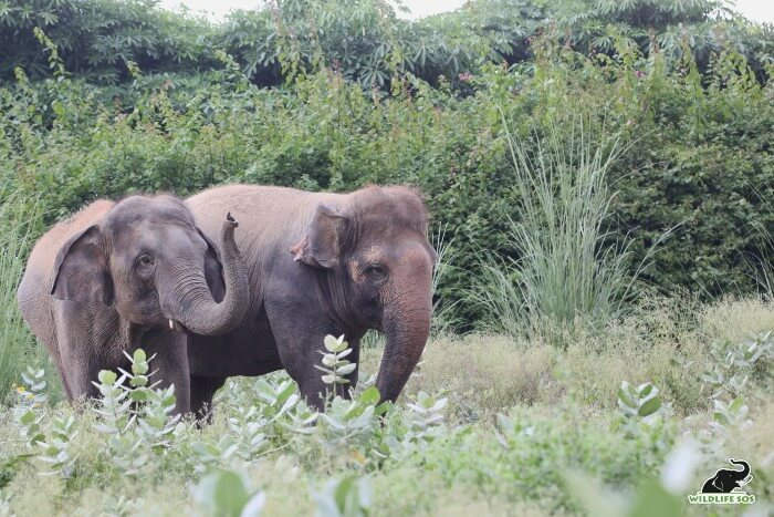 Young elephants like Coco and Peanut find solace in each other's company