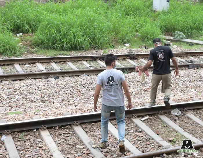 Slangenbezweerders verstopten slangen in de buurt van spoorlijnen, maar ons team vond ze bij elke stap