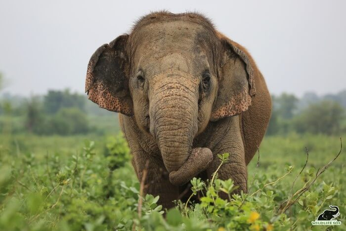 We feel honoured to care for these gentle giants each day of our lives!