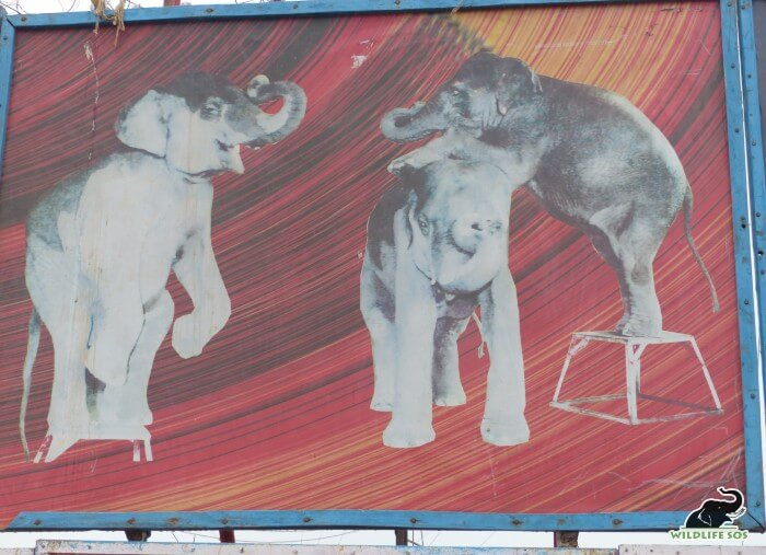 Elephants, once broken and tamed, are abused for the entertainment industry.